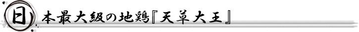 日本最大級の地鶏『天草大王』